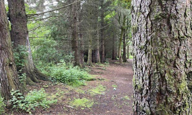Woods near Bute Drive, where the teenage 'vampire' threatened to drag his victim.