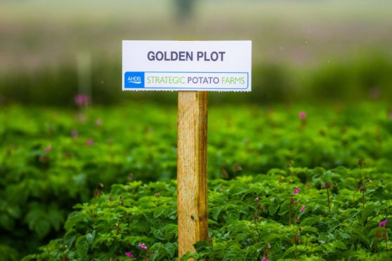 AHDB is ending its activities in the potato and horticulture sectors.