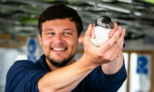 May Princess crew member Scott Gardner helps conservation efforts by releasing a puffin in the Forth.