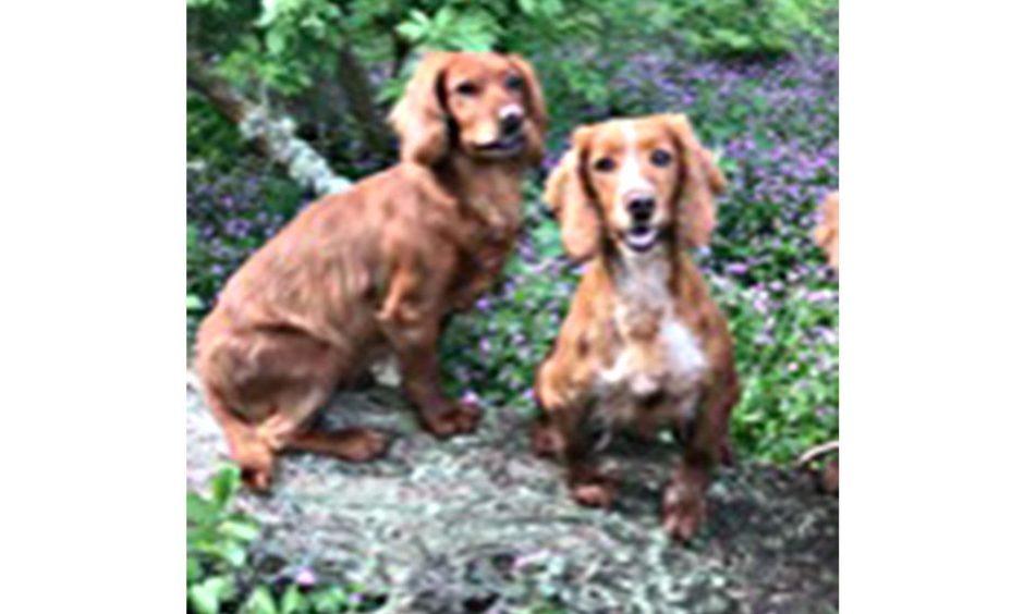 dog stolen perthshire