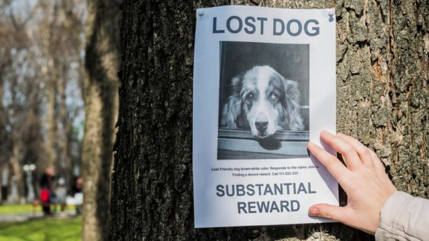 New scam targets missing pet owners