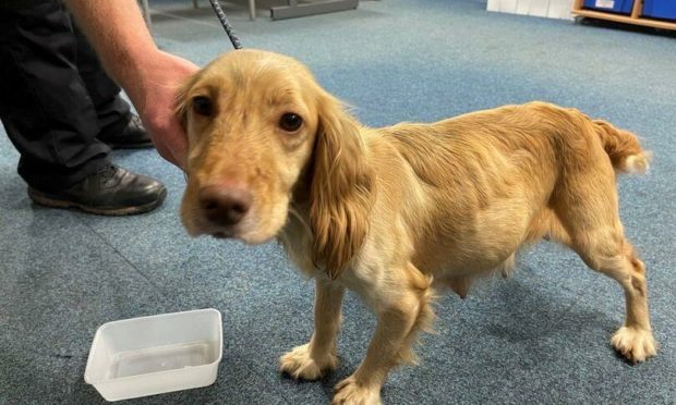 The dog has been reunited with its owners