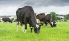 The EMB estimates dairy farmers are working for £2.56 an hour.