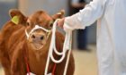 The show and sale takes place on Friday August 20.