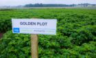 ALL THAT GLITTERS: The rapid dismantling of AHDB Potatoes has left research in the industry rudderless.
