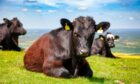 Rural Affairs Secretary Mairi Gougeon says new schemes to help farmers reduce emissions will be in place by spring 2022.