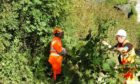 Workers cut vegetation from a section of track