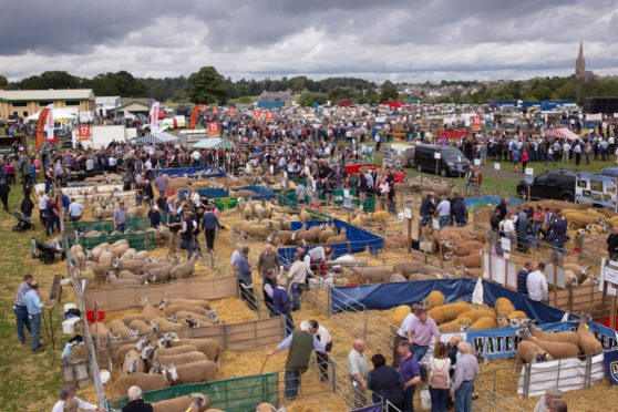 Averages were up at this year's Kelso Ram Sales.