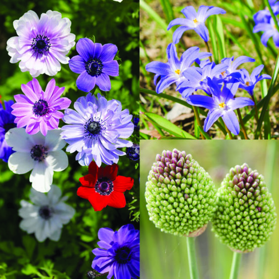 Spring flowers planted from bulbs