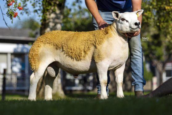 Ram lamb Bradleys Eubank topped the sale.