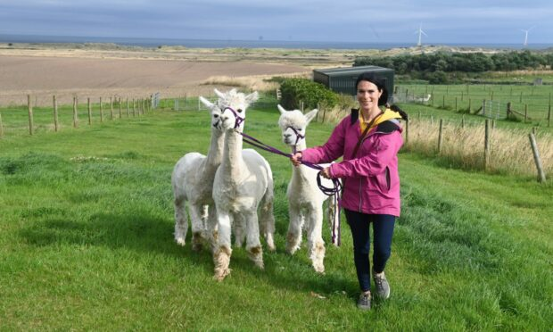 Gayle Ritchie meets the Highland Alpacas and takes them on a trek.
