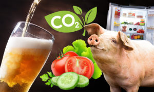 Some of the areas of the food and drink industry impacted by the CO2 shortage.