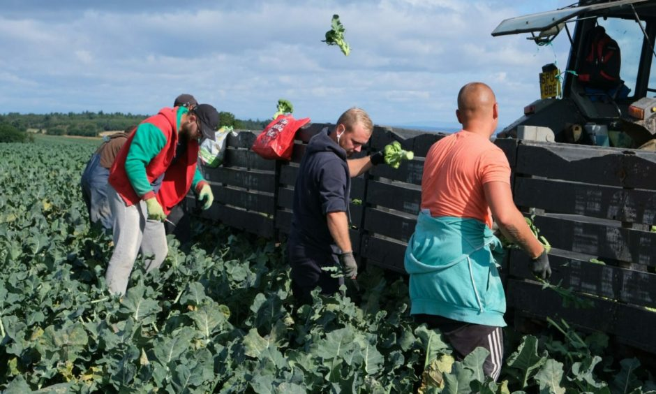 Visas were late in being issued for seasonal agricultural workers.