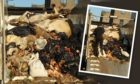 The truck full of dead animal parts was parked in Guthrie Street, Dundee.