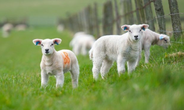 PASTORAL: Policy makers are being urged to consider the farming landscape at COP26.