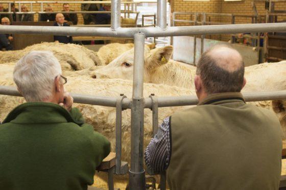 The company runs livestock markets in Forfar and Lanark.