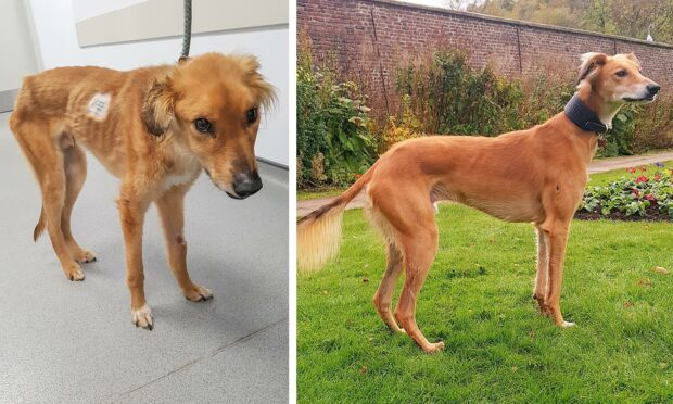 Red, in the distressed state he was found in, and nine months later following a full recovery.