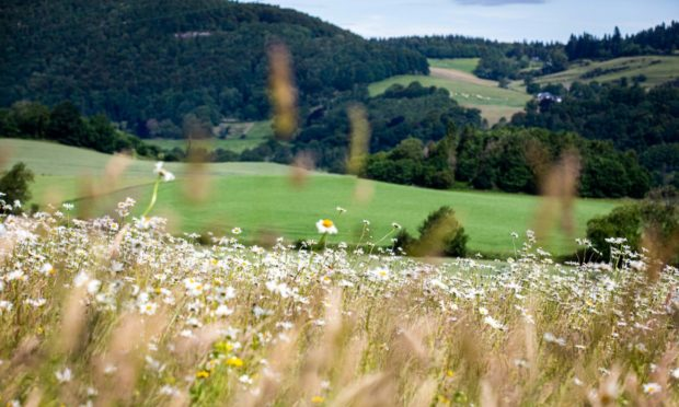 The agricultural industry has the ability to support positive environmental change.
