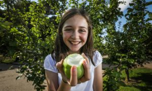Murroes primary pupil Evie Peoples, 11, with an apple from one of the school trees. Pic: Mhairi Edwards/DCT Media.