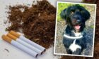Cigarettes and tobacco with a photo of Boo the dog inset