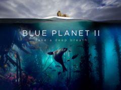 Blue Planet II caught the attention of Netflix, BBC chief Tim Davies told a conference (Lisa Labinjoh/Joe Platko/BBC/PA)
