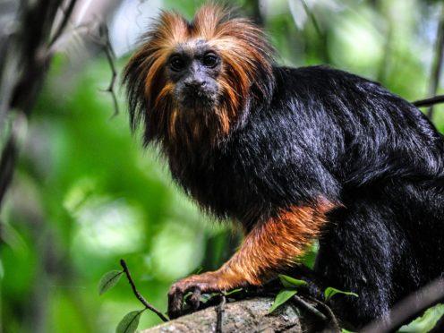 BBC show Primates (BBC/NHU)