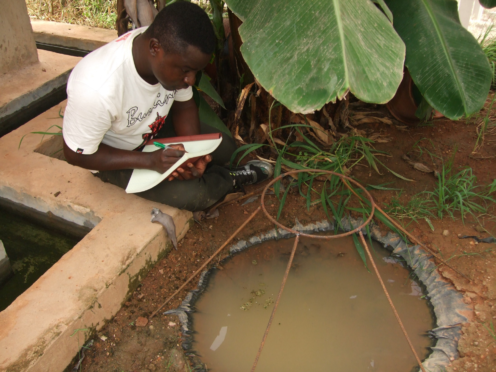 A researcher observes mosquito activity (Oliver Zida/ PA)