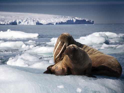 A walrus mother and pup resting on an iceberg, as seen in Blue Planet II (Rachel Butler/PA)