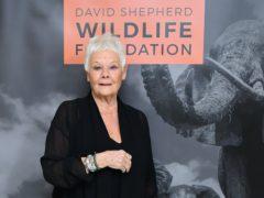 Dame Judi Dench has been a sensation on TikTok (Ian West/PA)
