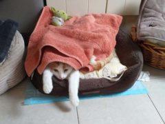 Suzi Kowalski's pet cat Spot (Suzi Kowalski)