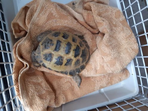 The abandoned creature was found on Monday by a member of the public (Scottish SPCA/PA)
