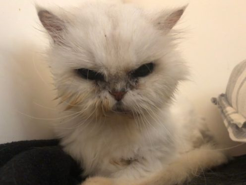 Lucy is on the road to recovery after being found in poor condition with matted fur (Scottish SPCA/PA)