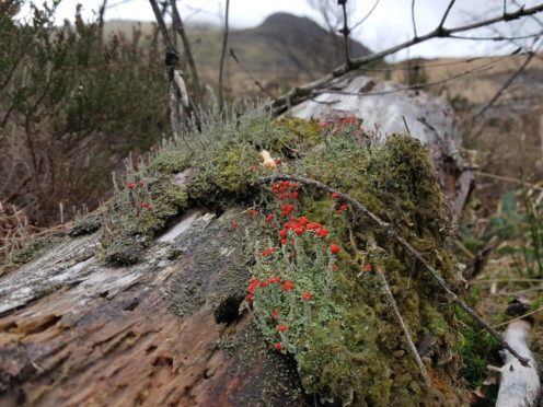 Scientists at Hardknott Forest are monitoring how quickly woodlands can regenerate naturally (@HardknottForest/PA)