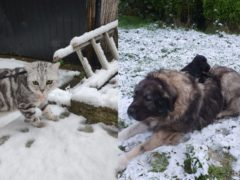 Dogs and cats explored the snowy landscape with their owners after snow fell across the UK (@laurenhodgkiss and Rescue Me)