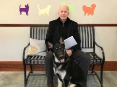 Major is one of two dogs owned by the Bidens (Joe Biden/Facebook)