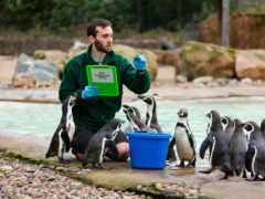 The stocktake must take place every year (ZSL London Zoo)