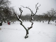 A family plays at the snow-covered Sygrou park in northern Athens (Thanassis Stavrakis/AP)