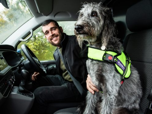 Dogs need to be properly secured to avoid drivers facing fines
