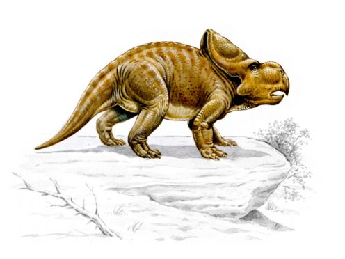 Protoceratops (The Trustees of the Natural History Museum)