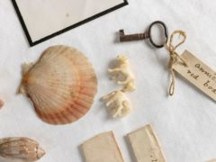 Treasures inside the red leather box include shells gathered by Charles Darwin on his famous Beagle Voyage (English Heritage)