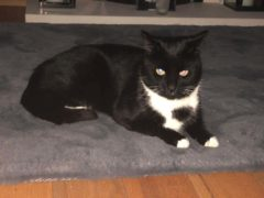 The cat died following the incident in Irvine (Scottish SPCA/PA)