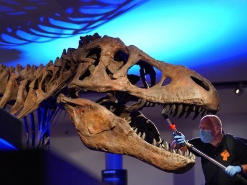 T. rex delivered bone-crushing bites by keeping a stiff jaw, research suggests (Owen Humphreys/PA)