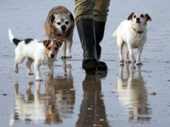 A man walks his dogs along the beach at Camber Sands in East Sussex (Gareth Fuller/PA)