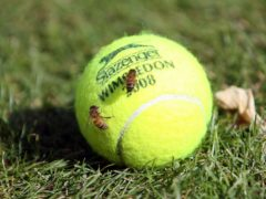 Two wasps on a tennis ball (Lewis Whyld/PA)