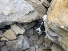 A Jack Russell was found trapped under rocks three days after it went missing (RNLI/Ed Thomas/PA)