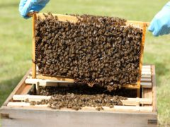 A diseased hive of honey bees has been discovered in Scotland (Andrew Milligan/PA)