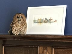 An owl who was rescued after falling down a chimney in Southport, (RSPCA/Handout)