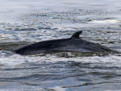The minke whale is to be put to sleep (Yui Mok/PA)