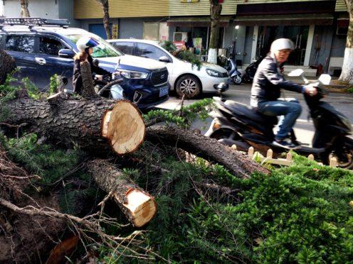A fallen tree in Nantong (Xinhua News Agency/PA)