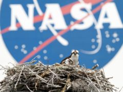 A female osprey and one of her three chicks are seen against the Nasa logo at the Kennedy Space Centre in Cape Canaveral. New Zealand has announced it is the latest country to sign a space agreement with the agency (Terry Renna/AP)
